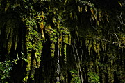 Puerto Rico Photo Originals - Stalactites At The Entrance To Las Cuevas De Camuy by Sandra Pena de Ortiz