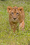 Stalking Practice Print by Ashley Vincent