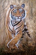 Paws Paintings - Stalking Tiger by Barry J Davis