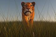 Liam Liberty - Stalking Tiger