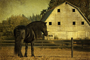 Forelock Photo Posters - Stallion At Rest D1535 Poster by Wes and Dotty Weber