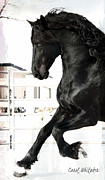 Friesian Posters - Stallion Glory Poster by Royal Grove Fine Art