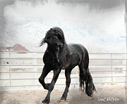 Friesian Posters - Stallion Magic Poster by Royal Grove Fine Art