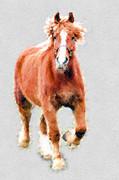 Stallion Portrait Print by Dan Friend