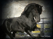 Stallion Power Print by Royal Grove Fine Art