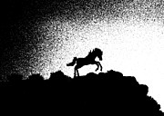 Stallion Photo Originals - Stallion Silhouette by Chuck Flewelling