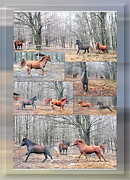 Patricia Keller Posters - Stallions Enjoy Some Horsing Around Poster by Patricia Keller