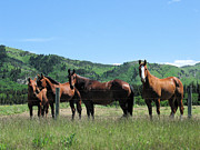 Fauna Originals - Stampede Horses by Gerry Bates
