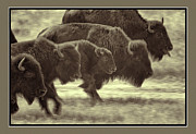 Bison Originals - Stampede by Michael Greiner