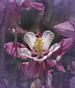 Columbine Photos - Stand Tall by Richard Cummings