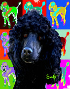 Dog Prints - Standard Poodle Black Print by Char Swift