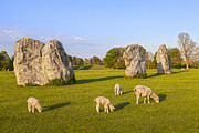 Wiltshire Framed Prints - Standing Stones and Sheep Avebury Framed Print by Colin and Linda McKie