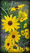 Black Eyed Susan Print Prints - Standing Tall BlackEyed Susan Print by Sheri McLeroy