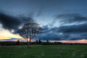 Big Tree Photos - Standing Tall by Matt Dobson