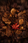 Fallen Leaf Photos - Standout by Wenata Babkowski