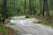 Water Flowing Prints - Stanley Brook in Acadia National Park Print by Juergen Roth