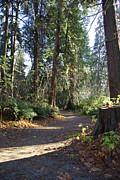 Marilyn Wilson - Stanley Park Trail