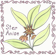 Star Drawings Framed Prints - Star Anise Framed Print by Christy Beckwith