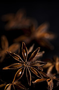 Aniseed Posters - Star Anise Study Poster by Anne Gilbert