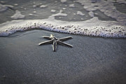 Star Metal Prints - Star fish Metal Print by Matthew Trudeau
