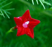 Kim Pate - Star Glory