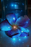 Star Light Plumeria Print by Linda Sannuti
