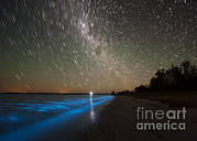 Edge Prints - Star Trails And Bioluminescence Print by Philip Hart