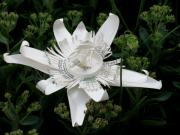 Recycle Art Sculptures - Starbucks coffee cup passion flower by Alfred Ng