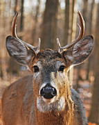 Michael Peychich - Stare Down with an Eight Point Buck_1112