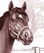 Haybarn Posters - Stare of The Stallion Poster by Patricia Howitt
