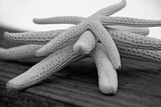 Carolyn Stagger Cokley - Starfish 3235 black and white