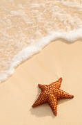 Sandy Photo Posters - Starfish and ocean wave Poster by Elena Elisseeva
