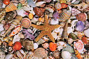 Eric Evans - Starfish and Seashells