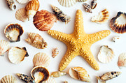 Shell Texture Posters - Starfish and shells Poster by Michal Bednarek