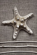 Seastar Metal Prints - Starfish and Sticks Metal Print by Carol Leigh