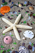 Shell Texture Posters - Starfish beach still life Poster by Garry Gay