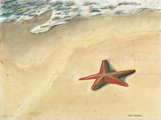 Atlantic Ocean Pastels Metal Prints - Starfish Metal Print by David Jackson