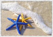 Elizabeth Budd - Starfish in the Surf