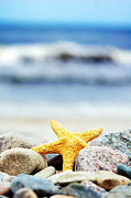 Closeup Art - Starfish by Michal Bednarek