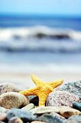 Starfish Print by Michal Bednarek