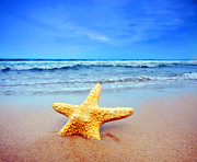Starfish Prints - Starfish on a beach   Print by Michal Bednarek