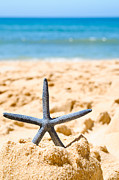 Frothy Posters - Starfish On Algarve Beach Portugal Poster by Christopher and Amanda Elwell