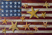Stripes Framed Prints - Starfish on American flag Framed Print by Garry Gay