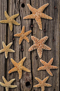 Starfish Prints - Starfish on old wood Print by Garry Gay