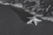 Star Fish Framed Prints - Starfish On The Beach BW Framed Print by Susan Candelario