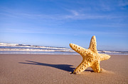 Warm Summer Posters - Starfish on the summer beach Poster by Michal Bednarek