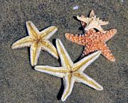 Tammy Espino - Starfish