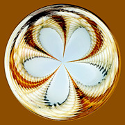 Round Shell Metal Prints - Starfish to Flower - Orb Metal Print by Kaye Menner