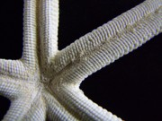Mary Deal - Starfish Underworld