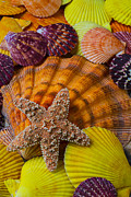 Shell Texture Posters - Starfish with seashells Poster by Garry Gay